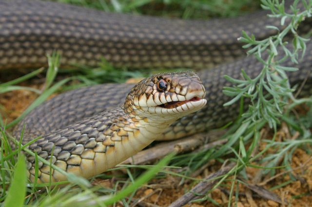 Змеи не нападают на людей без причины.