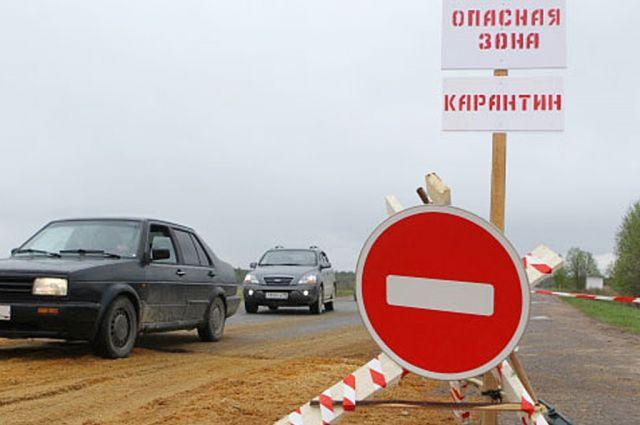 Вдеревне Столинского района из-за случая бешенства ввели двухмесячный карантин