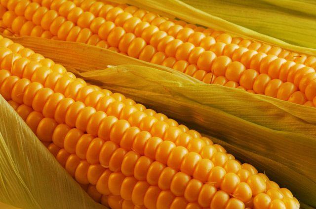 Съедобное золото есть только в кукурузе.