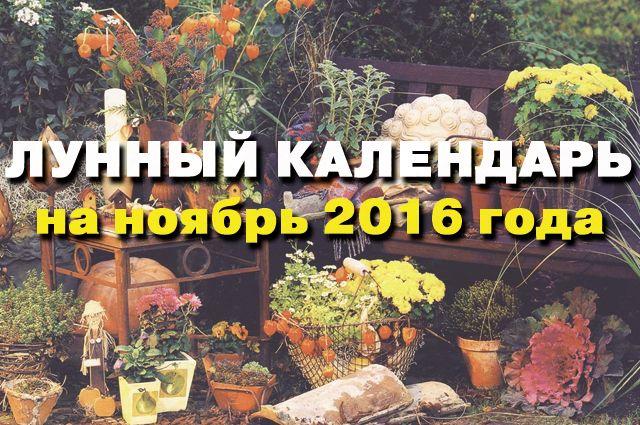лунный календарь садовода-огородника на ноябрь 2016 года.