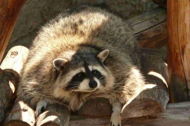 Животные уже три раза укусили детей вконтактном зоопарке Гомеля