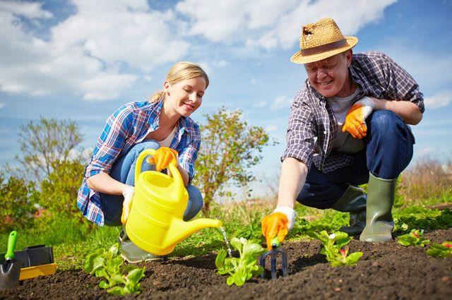 Урожай недолго собирается, но трудиться над ним надо весь год.
