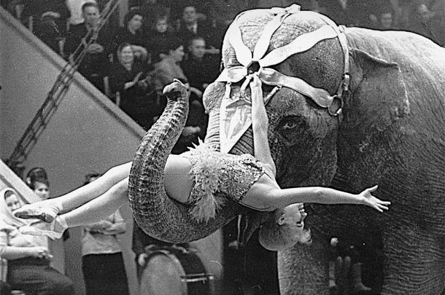 «Слоны очень влюбчивы. После смерти зятя Нины Корниловой одна из слоних чуть не убила его вдову и сына - никак не могла простить потерю главного хозяина. Пришлось вывести её из номера».