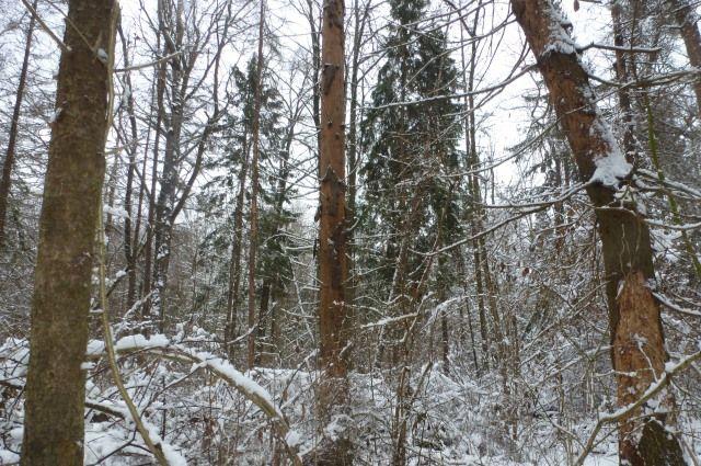 Налесозаготовке вБрестской области умер мужчина