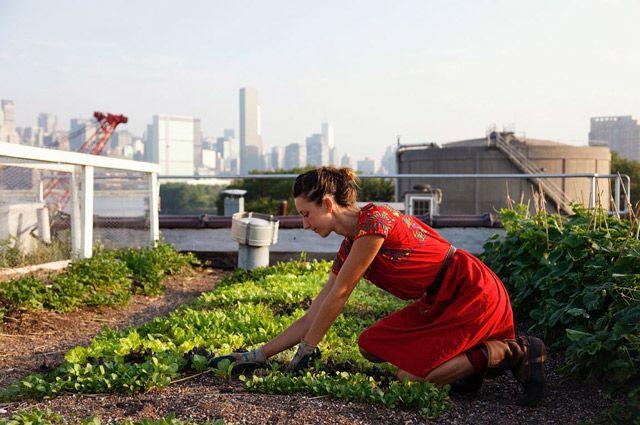 Город тоже можно приспособить для ферм.