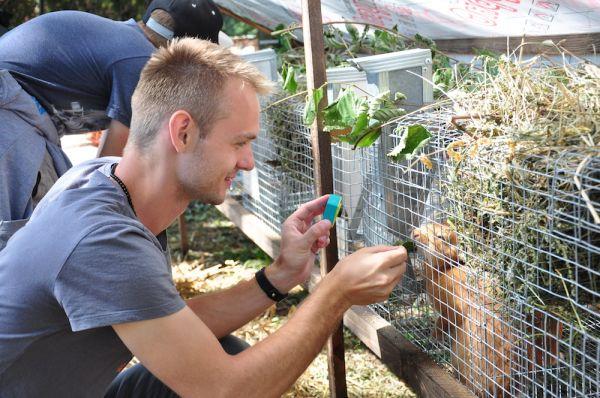 Кроме кукурузного квеста, парк развлечений «Кукуполис» предложит всем посетителем ряд занимательных активностей, в том числе и контактный зоопарк, где можно будет поближе познакомиться с животными.
