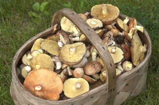 Пенсионер скончался вГомеле после употребления жареных грибов
