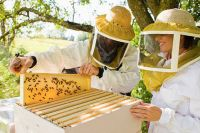 Опытные пчеловоды передадут знания начинающим.
