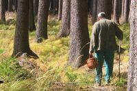 Портрет типичного грибника - пожилой одинокий человек.