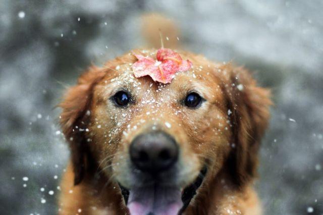 Исследование: собаки используют мимику для общения слюдьми