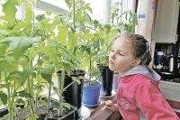К уходу за рассадой можно подключить детей и внуков.