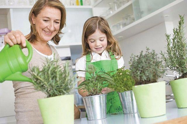 Растениям нужно правильно подобрать домашние условия.