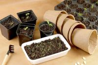 Правильно подобранные ёмкости для выращивания рассады - одно из слагаемых успеха.