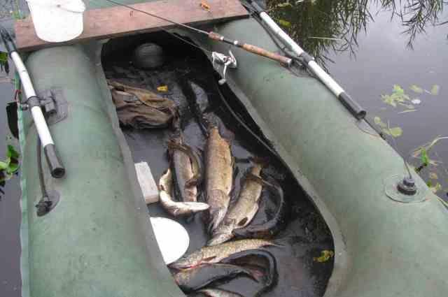 В Брестской и Гомельской областях с 20 марта запрещен лов всех видов рыбы