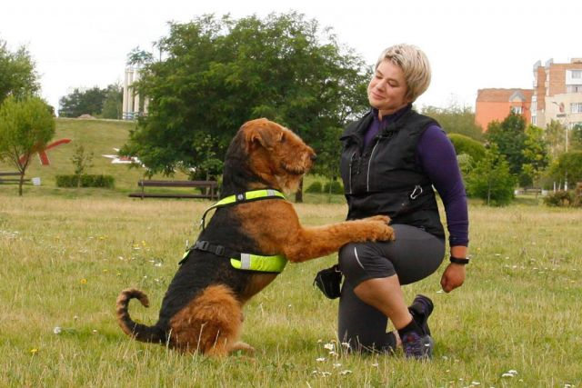 Когда люди видят, что питомец не просто послушен, а еще умеет делать забавные трюки, это меняет восприятие собаки.