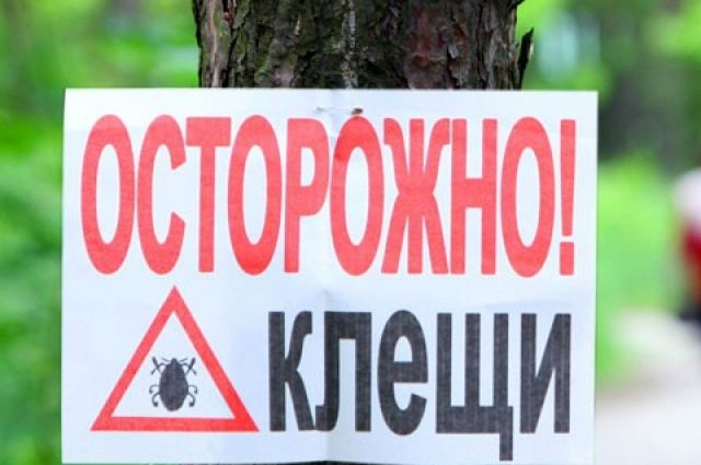 Сезон активности клещей начался в Беларуси