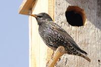 Птицам важен не дизайн домика.