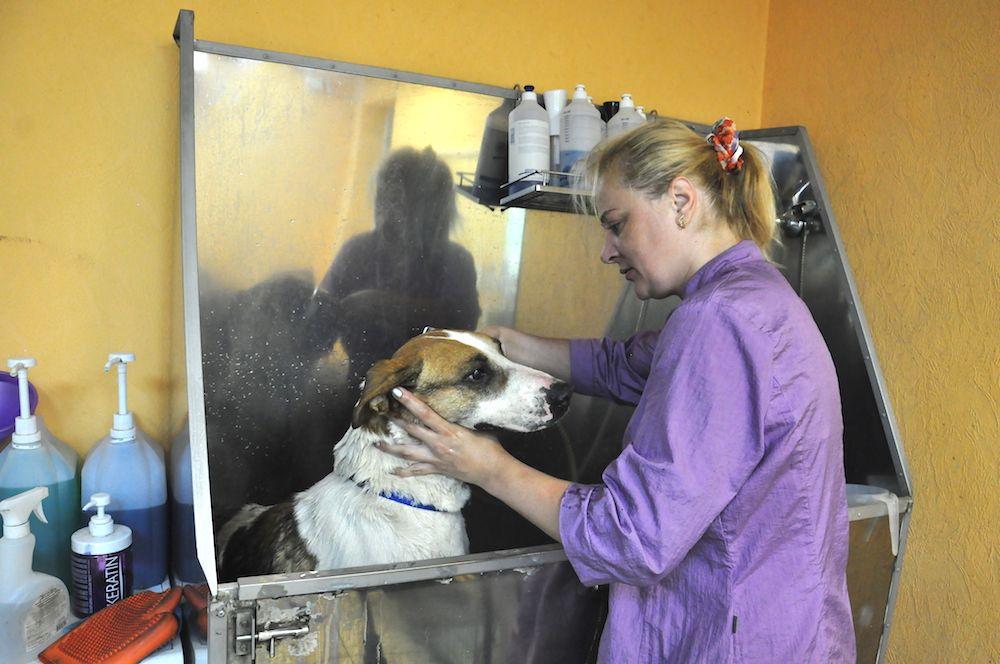 Очень важно было тщательно помыть Альбара, чтобы вернуть его шерсти былые краски.