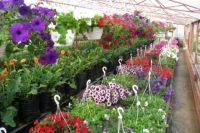 При внимательном подходе цветение гарантировано.