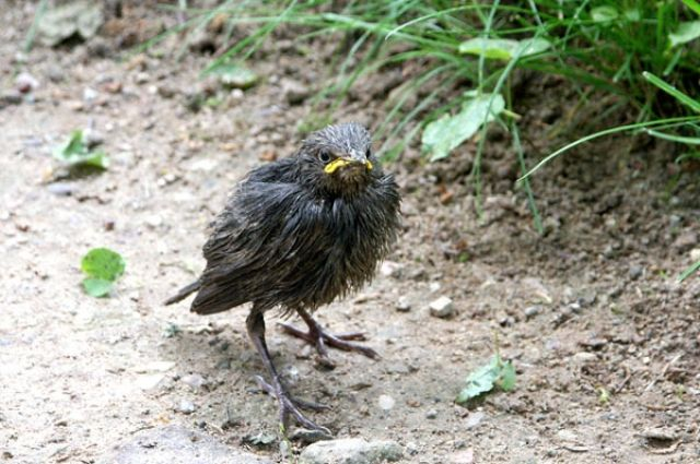 Изъятие птиц из дикой природы запрещено.