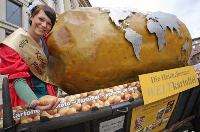 В Беларуси «народный» овощ пока не увековечен. А вот в немецком Эрфурте есть памятник «Всемирному картофелю». Потому что он объединяет весь мир.