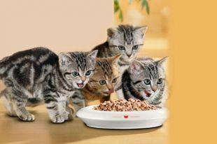 В корме для животных главное – запах, а не вкус.