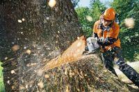 При разработке проекта должно быть сохранено не менее 50% деревьев с диаметром ствола от 4 см.