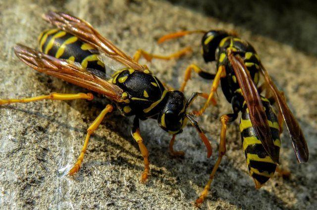 «Злые» насекомые на самом деле помогают сохранить урожай.