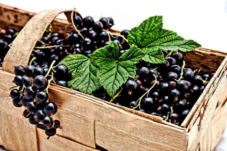 Чёрная смородина (200 мг). Настало время извлечь из морозилки все ягоды, что хранились там с лета. И обязательно — чёрную смородину. Потому что в ней содержится довольно много витамина С, причём в замороженных ягодах он остаётся практически на 100 процентов. Хорошо сохраняется аскорбиновая кислота и в соках и компотах из смородины. Кроме витамина С, смородина ценится за высокое содержание калия, фосфора и кальция.