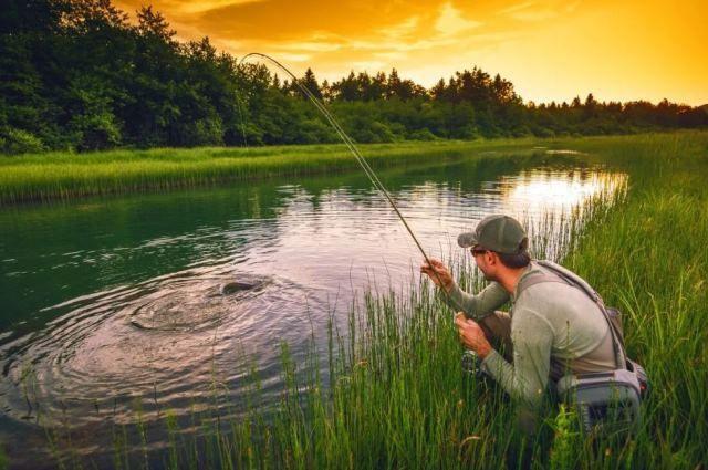 Если вы выловили рыбу в период запрета на лов именно этой особи, ее нужно выпустить живой в рыболовные угодья.