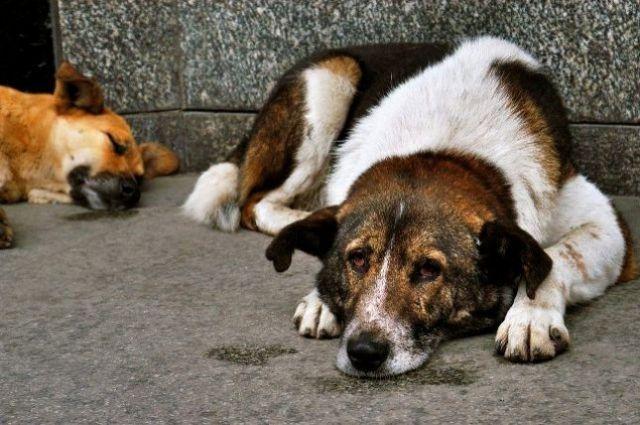По данным ВОЗ, в мире насчитывается около 200 млн бродячих собак.