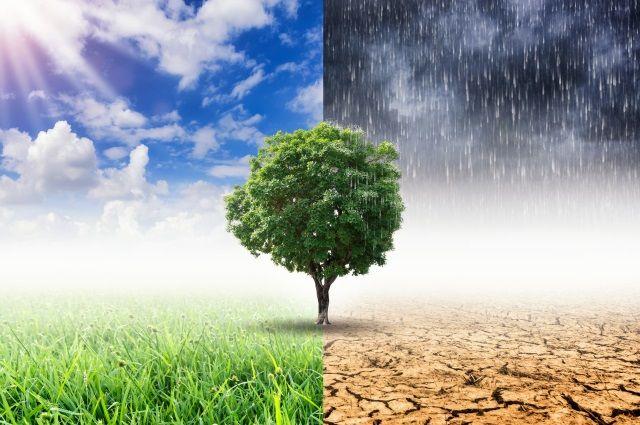 Они идут на север. Какие сюрпризы готовит нам быстро меняющийся климат?   Общество   АиФ Аргументы и факты в Беларуси