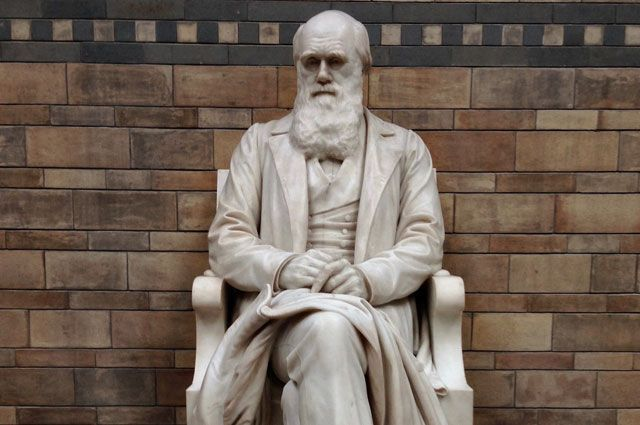 Статуя Чарльза Дарвина в Музее естествознания в Лондоне.