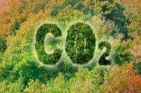 Тропические леса перестают выполнять функцию поглощения углекислого газа.