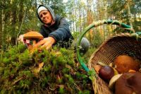 Прежде чем отправиться в лес, стоит ознакомиться с Лесным кодексом.