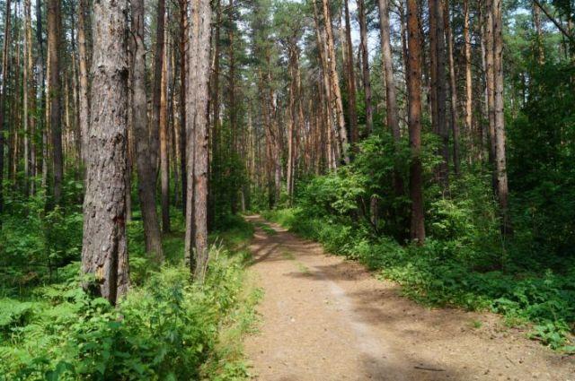 Ограничения на посещение лесов действуют в 3 районах Гомельской области и 8 Гродненской